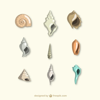 Coleção dos seashells
