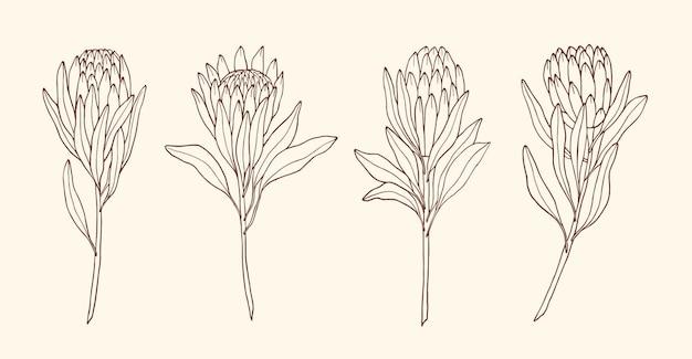 Coleção elegante de esboços de flores