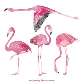 Coleção Flamingo em estilo aquarela