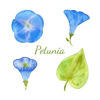 Coleção floral de aquarela. flores e folhas, ramos, conjunto de elementos de design de ervas. vector desenhado mão