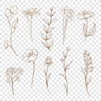 Coleção floral flores e folhas