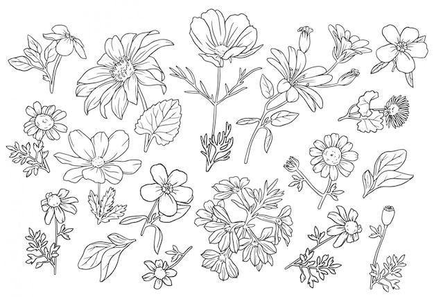 Coleção flores silvestres