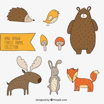 Coleção floresta animal lindo