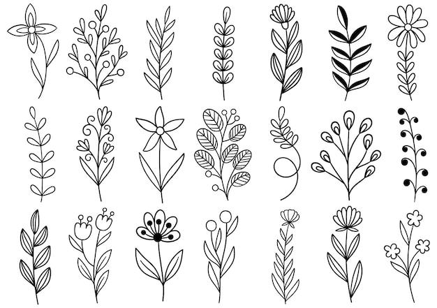 Coleção floresta samambaia arte eucalipto ilustração folhagem