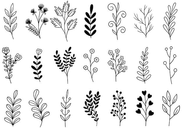 Coleção floresta samambaia e eucalipto arte folhagem