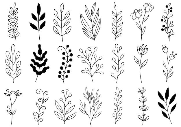 Coleção floresta samambaia eucalipto arte folhagem folhas naturais ervas em estilo de linha. flor desenhada à mão