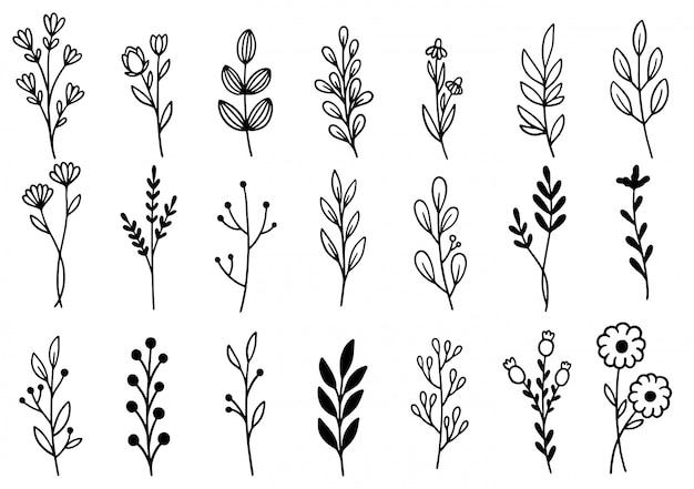 Coleção floresta samambaia eucalipto arte folhagem folhas naturais ervas em estilo de linha. ilustração elegante de beleza decorativa para flor desenhada à mão