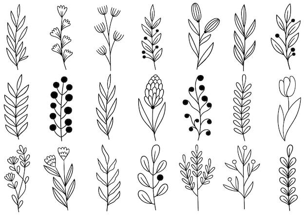 Coleção floresta samambaia eucalipto arte folhagem folhas naturais ervas em estilo de linha. ilustração elegante de beleza decorativa para flor desenhada à mão Vetor Premium
