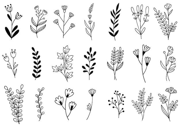 Coleção floresta samambaia eucalipto arte folhagem folhas naturais ervas em estilo de linha.