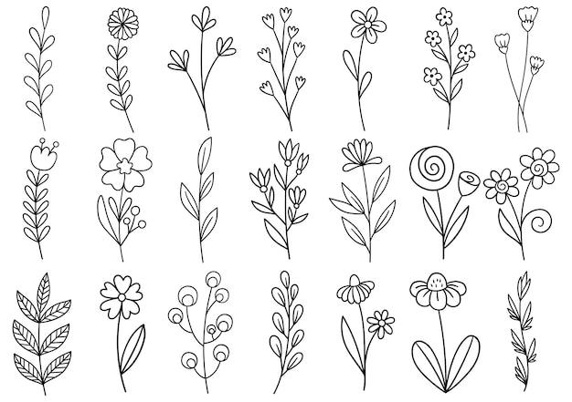 Coleção floresta samambaia eucalipto arte folhagem folhas naturais ervas em estilo de linha