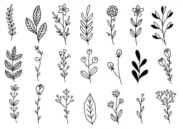 Coleção floresta samambaia eucalipto arte folhagem natural deixa ervas no estilo de linha. ilustração elegante de beleza decorativa para design mão desenhada flor Vetor Premium