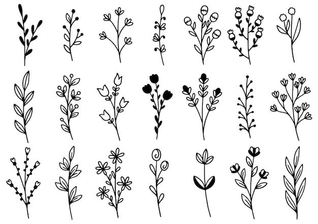 Coleção floresta samambaia eucalipto em estilo de linha.