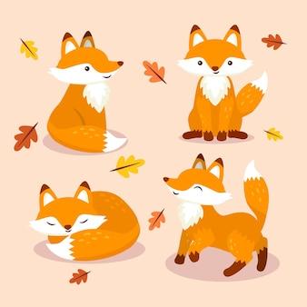 Coleção fox desenhados à mão