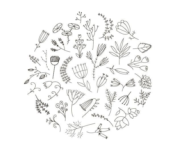 Coleção gráfica com ervas do campo