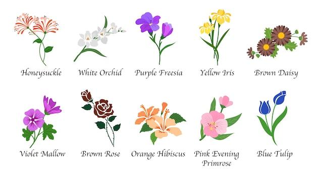 Coleção isolada de flores de jardim botânico de natureza orgânica