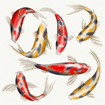 Coleção japonesa de peixes coloridos