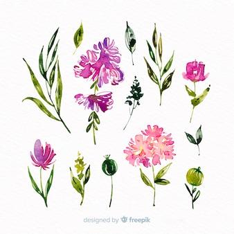 Coleção linda aquarela floral ramo
