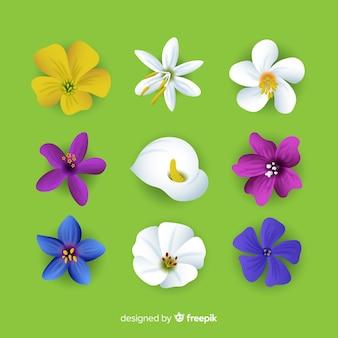 Coleção linda flor com design realista