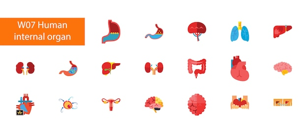 Coleção lisa dos ícones de dezenove órgãos internos no fundo branco.