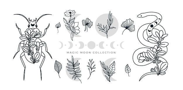 Coleção mística de arte floral linha arte cobra besouro inseto lua fases ilustração autêntica