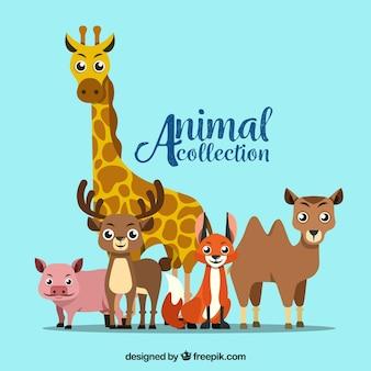 Coleção moderna de animais