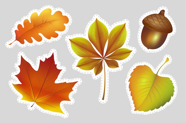 Coleção outono com folhas coloridas
