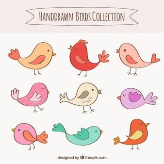 Coleção pássaros desenhados mão