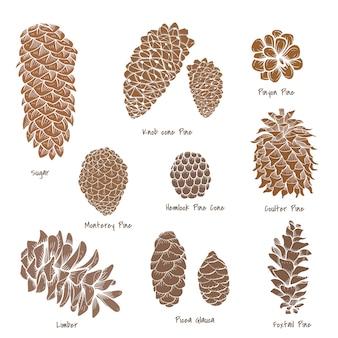 Coleção pinecone