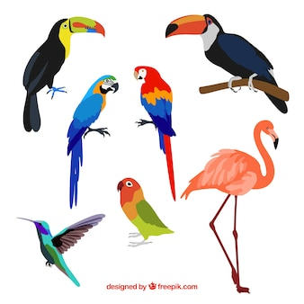 Coleção plana de pássaros exóticos