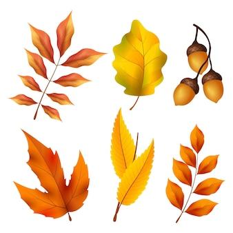 Coleção realista de elementos de outono