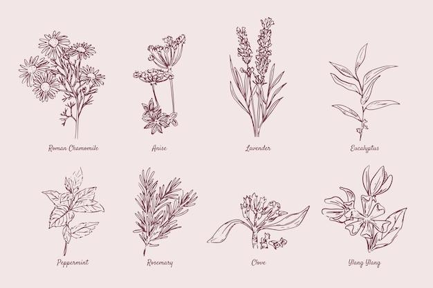 Coleção realista de ervas de óleo essencial desenhada à mão