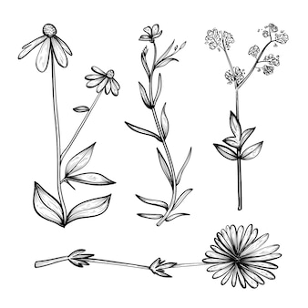 Coleção realista de ervas desenhadas à mão e flores silvestres