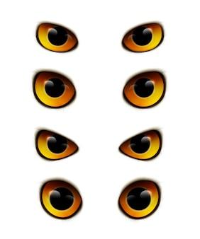 Coleção realista de olhos de coruja