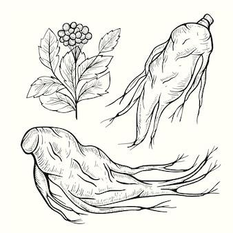 Coleção realista de plantas de ginseng