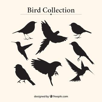 Coleção silhuetas do pássaro