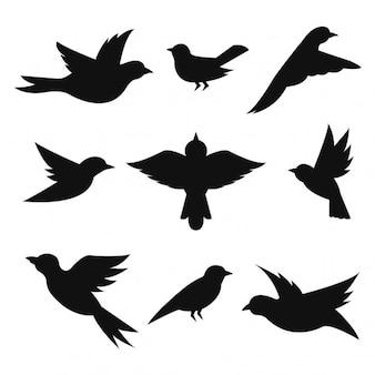 Coleção silhuetas dos pássaros