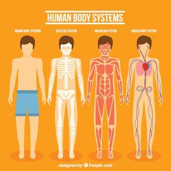 Coleção sistema do corpo humano