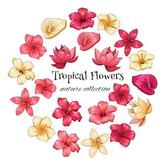 Coleção tropical com flores exóticas em estilo cartoon. ilustração vetorial para design isolado no fundo branco.