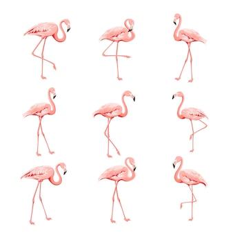 Coleção tropical de flamingos rosa