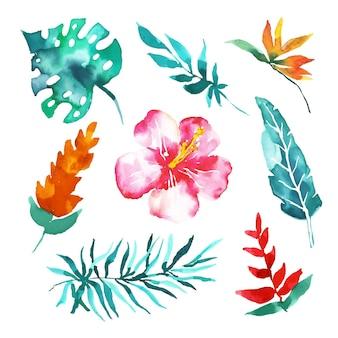 Coleção tropical de flores e folhas em aquarela