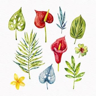 Coleção tropical de folhas e flores
