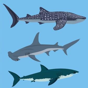 Coleção tubarões colorido