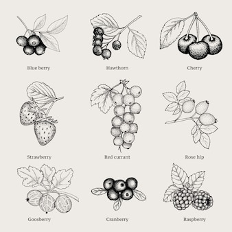 Coleção vintage natural berries