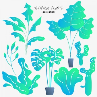 Colecção de plantas tropicais