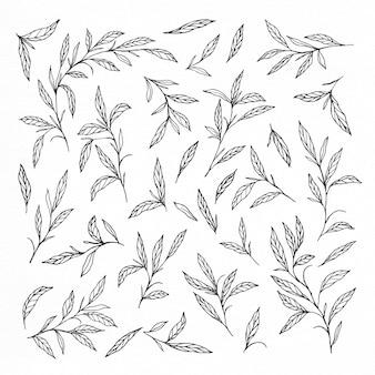 Coleções de folhas e ramos desenhadas a mão