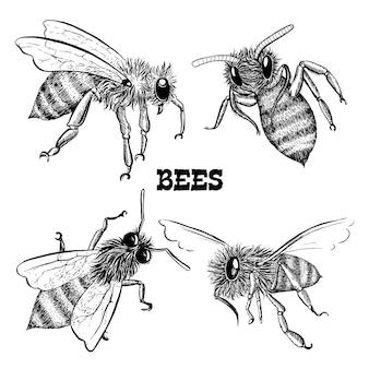 Coleções de ícones de abelha de mel