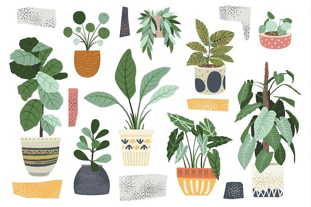 Coleções de plantas de interior para decoração de casa