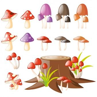Coleta de cogumelos coloridos