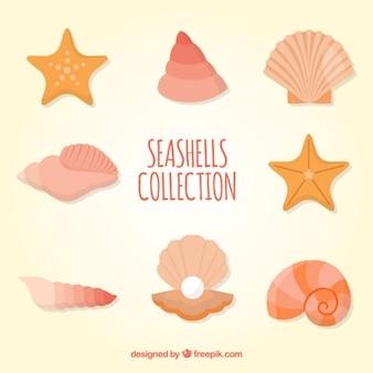 Coleta de conchas coloridas
