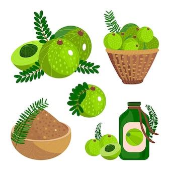 Coleta de elementos de frutas orgânicas de amla plana